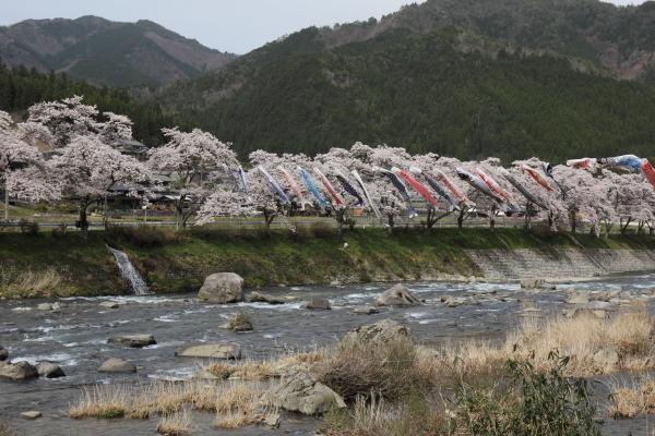 160409_和良川のこいのぼり.JPG